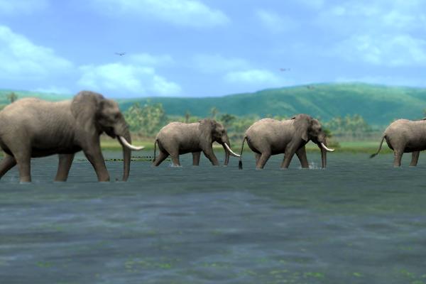 코끼리 무리!